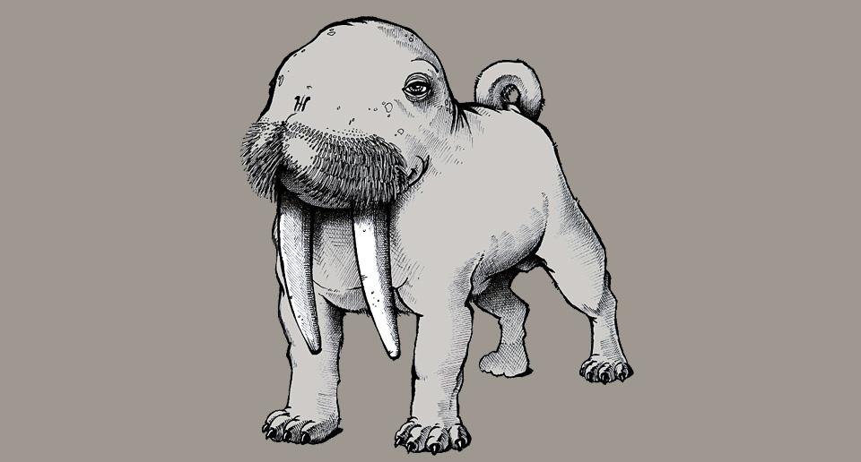 animals-bullrus.jpg