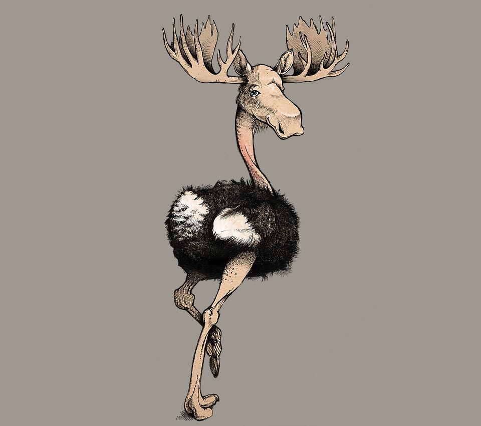 animals-moosetrich.jpg